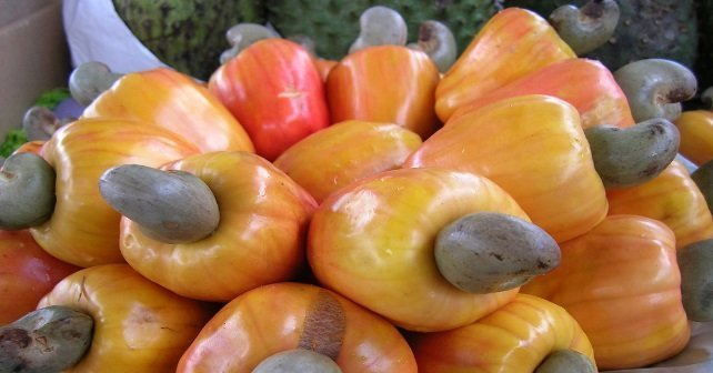 anacardo, cultivarsalud