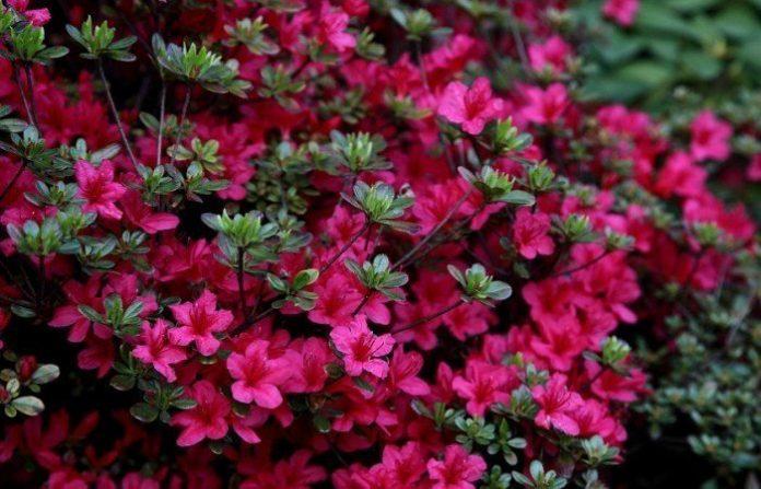 trucos plantas, red cultivarsalud