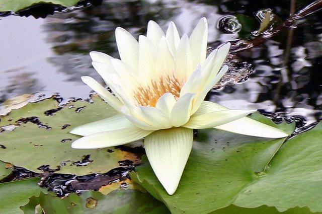 Patanjali. Los 51 Yoga Sutras para el crecimiento personal
