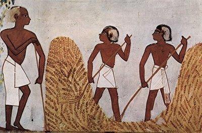 Cultivo de cereales en la época egipcia