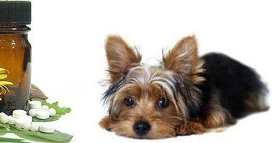Organoterapia en animales