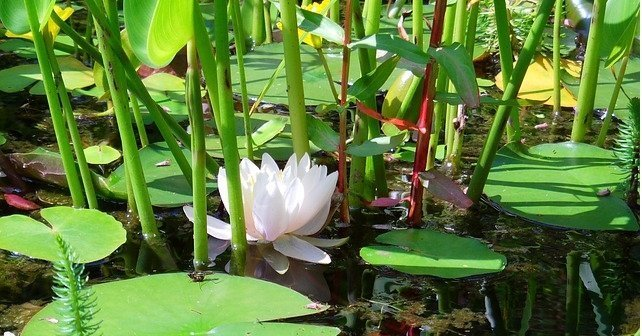yoga sutras de patanjali, red cultivarsalud