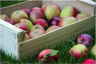 la manzana, red cultivarsalud