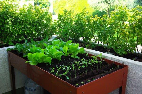 huerto, red cultivarsalud
