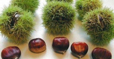 plantas, Red cultivarsalud