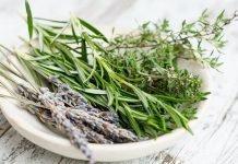plantas que ayudan al sistema digestivo