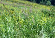 Hierba, red cultivarsalud