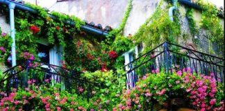 plantas de balcon