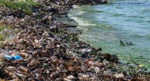 La destrucción de la biodiversidad