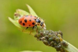cómo acabar con las plagas de nuestras plantas