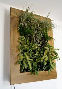 cuadro vegetal vivo