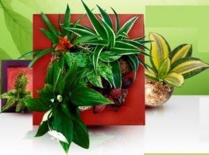 plantas-vivas-en-cuadros_1
