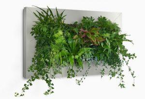 power-of-plants