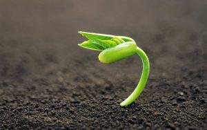 ¿cultivas tu salud?