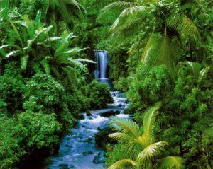 importancia de las selvas tropicales