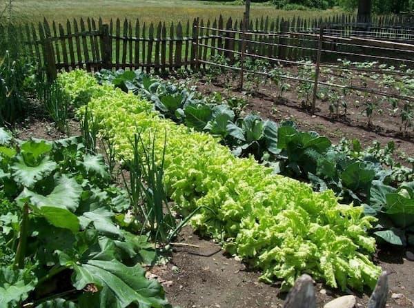 agricultores ecológicos