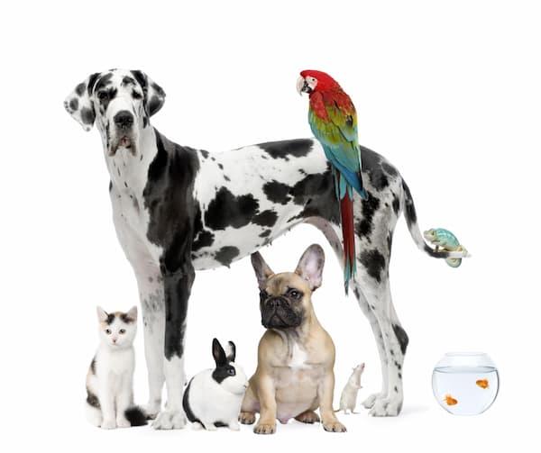 mascotas ecologicas