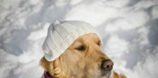 las mascotas y el frio