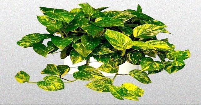 plantas que no se mueren