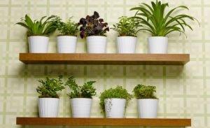 consejos-para-tener-plantas-en-casa-1