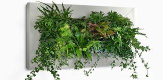 plantas en invierno