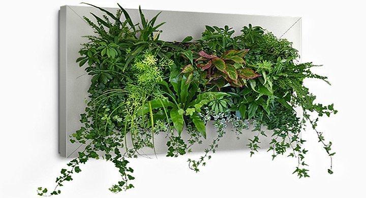 Mis plantas en invierno revista cultivarsalud for Plantas de jardin interior