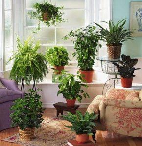 plantas-ornamentales