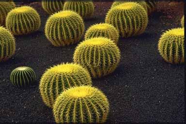 cactus diferentes