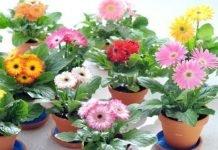 como se cultivan las plantas ornamentales