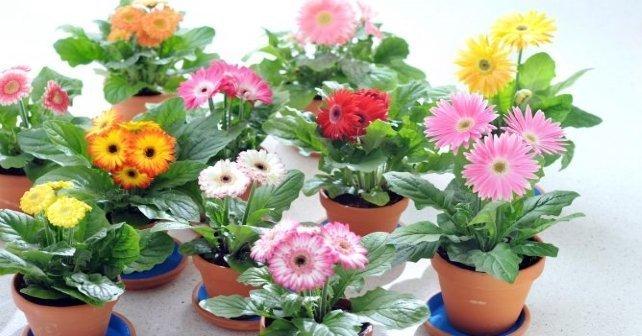 Como Se Cultivan Las Plantas Ornamentales Revista