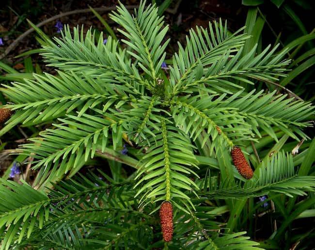 plantas prehistoricas