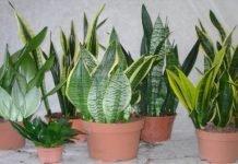 plantas que crecen solas