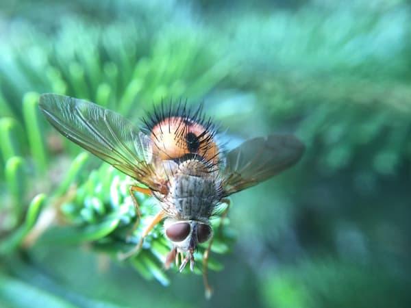Remedios contra las picaduras de insectos • Revista cultivarsalud