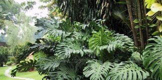 plantas no tan de moda
