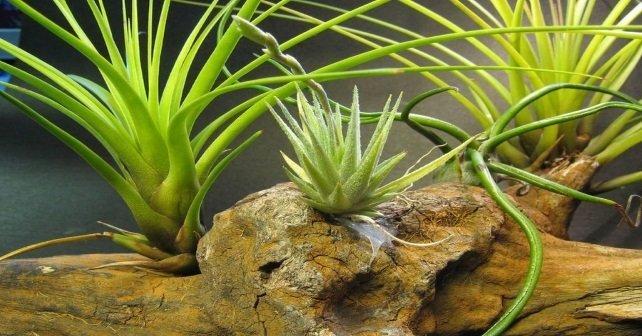 mitos de las plantas