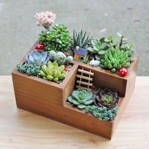 Jardines en miniatura Te animas a tener uno Revista cultivarsalud