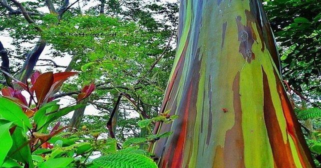 5 árboles increibles