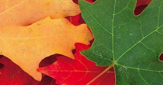las hojas que no son verdes