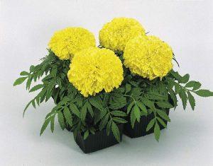 plantas sólo de temporada