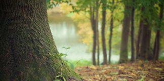 sanando tus raíces