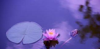 qué es realmente mindfulness