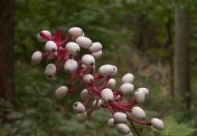 plantas sorprendentes