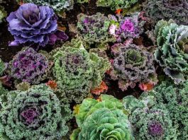 agroecología y consumo responsable