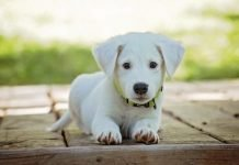 Imagen de un perro, consejos antes de tener un animal