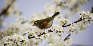 Las alergias esta primavera
