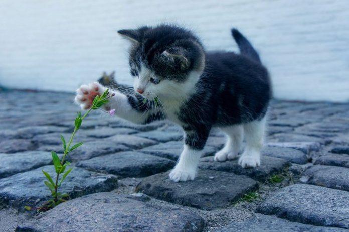 uñas de los gatos