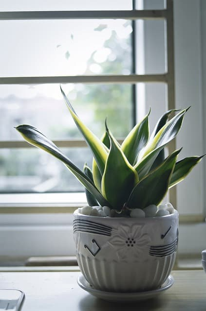 plantas de interior duraderas