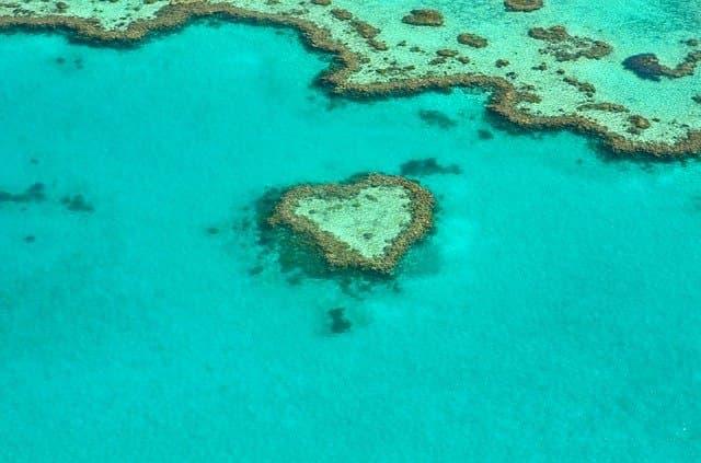 El calentamiento global mata los corales
