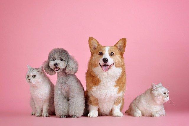 Alimentos ECO también para tus mascotas