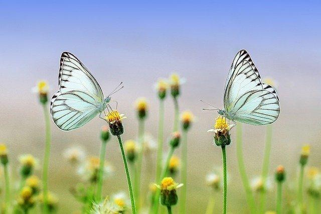 Por qué la naturaleza nos hace sentir bien